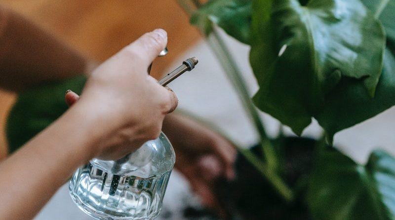 vaso smart garden