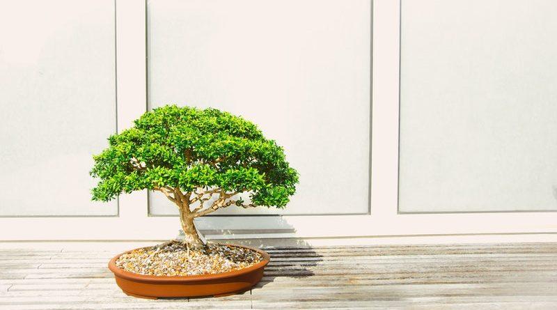 vasi per bonsai