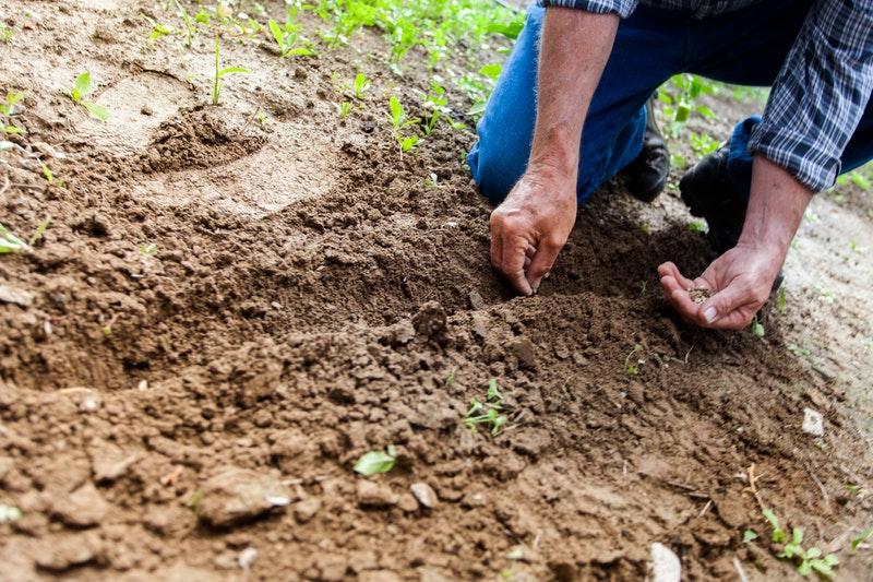 tester pH terreno