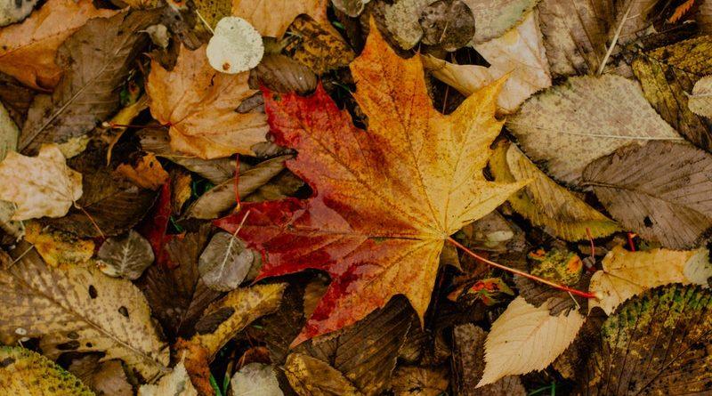 rastrello per foglie