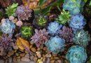 sassi luminosi per giardino